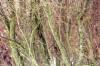 zelenestromy-zmenseni-web_706.JPG